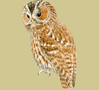 Take in a tawny owl species mountain animal