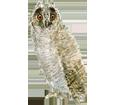 Eagle-Owl ##STADE## - coat 12
