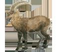Alpine Ibex ##STADE## - coat 69