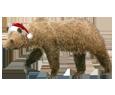 Brown Bear ##STADE## - coat 117