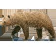 Brown Bear ##STADE## - coat 69