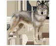 Wolf ##STADE## - coat 52
