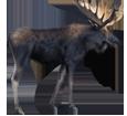 Moose ##STADE## - coat 37