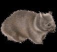 Wombat ##STADE## - coat 52