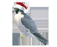 Peregrine Falcon ##STADE## - coat 117